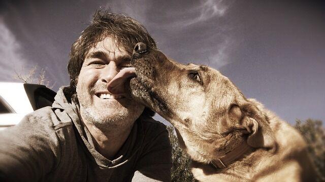 て を なめ くる 犬 が 口 犬が他の犬の顔や体をなめる